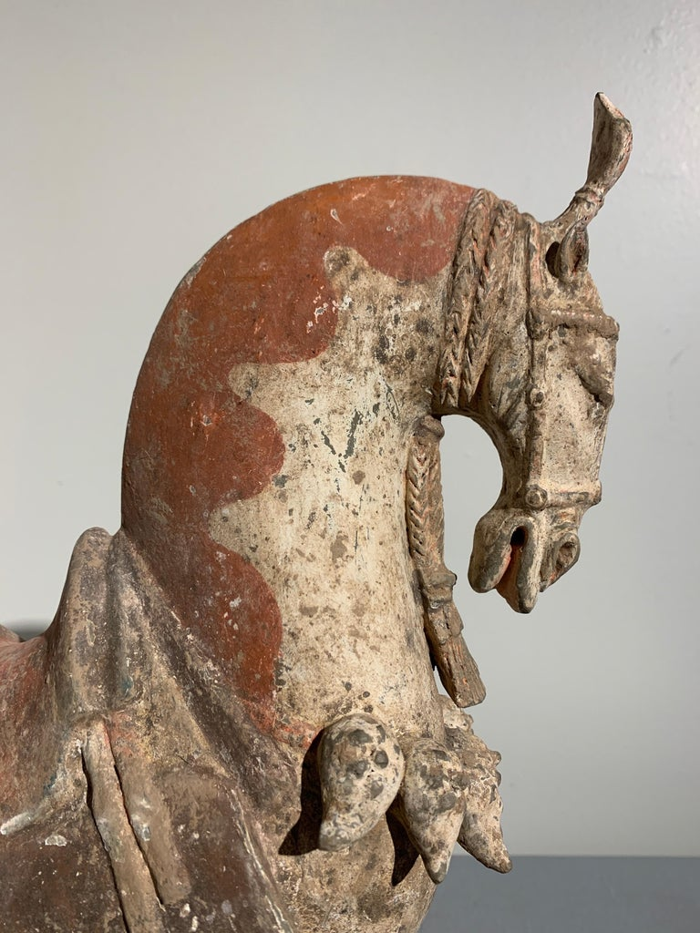 18th Century and Earlier Chinese Painted Pottery Caparisoned Horse, Northern Wei Dynasty '386-534' For Sale