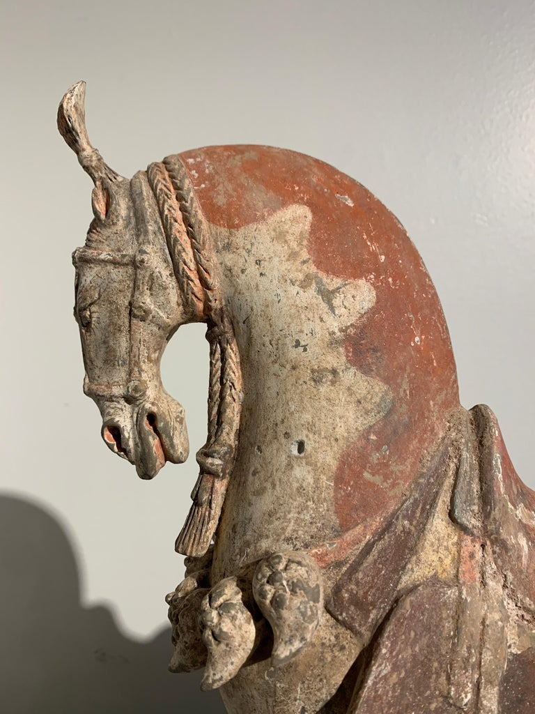 Chinese Painted Pottery Caparisoned Horse, Northern Wei Dynasty '386-534' For Sale 2