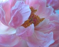 LAKSHMI (floral pink painting realist flower oil painting canvas)