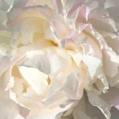 Salt Spring Peony 11 (floral realist off white flower oil painting canvas petals