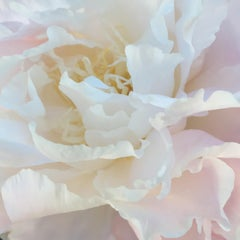 Salt Spring Peony 15 (floral realist pale rose flower oil painting canvas pink)