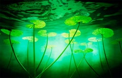 Lillies - Nature, Flora and Fauna, Flowers, Underwater, Green, Water