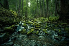 Olympic National Park No. 1