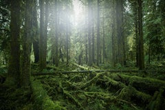 Olympic National Park No. 2