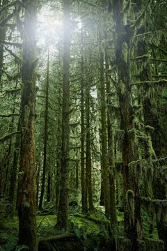 Olympic National Park No. 3