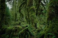 Olympic National Park No. 4