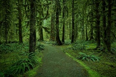 Olympic National Park No. 5