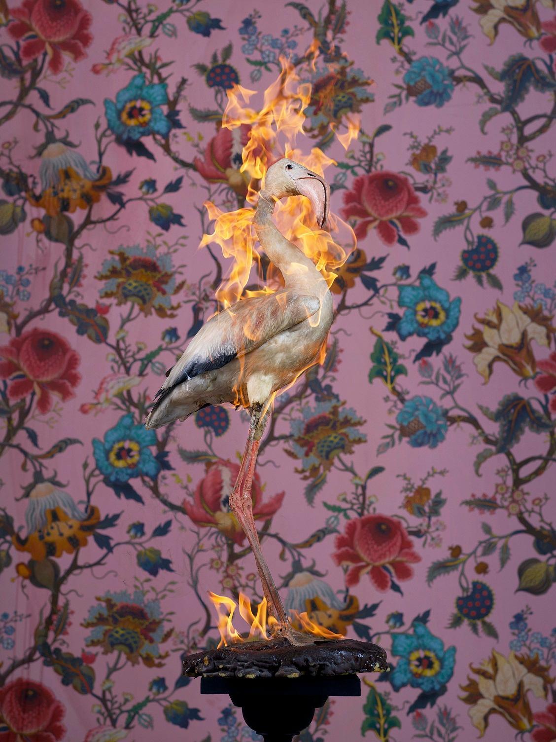 Flamingo, Residence of Impermanence series