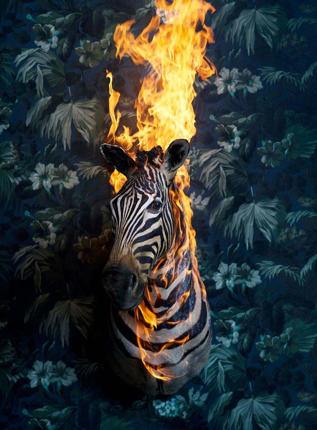 Zebra, Residence of Impermanence series