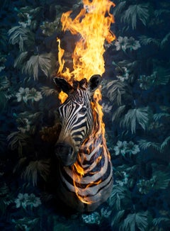 Zebra, Residence of Impermanence series