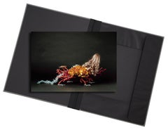 Creature I - photograph in classic archival artwork portfolio gift binder