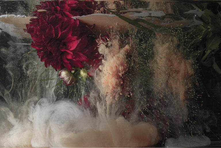 Christian Stoll Still-Life Print - Flora ll - large format photograph of abstract floral and liquid cloud explosion