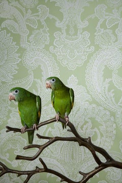 Canary Wing Bee Bee No. 7746 - Green & white Victorian wallpaper bird portrait