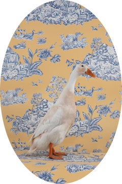 """Indian Runner Duck """"Noodle"""" No. 0256 - White duck, blue, white, yellow oval wall"""
