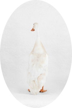 "Indian Runner Duck ""Noodle"" No. 0264 - White duck w/ embossed floral wallpaper"