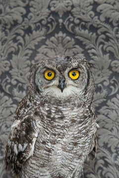 Spotted Eagle Owl No. 7261 - Gray owl w/ yellow eyes, floral Victorian wallpaper