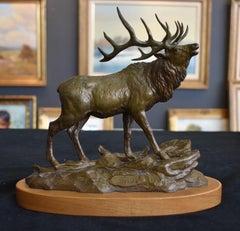"""""""Wapiti""""  Elk"""