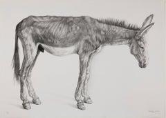Burro Delgado (Thin Donkey)