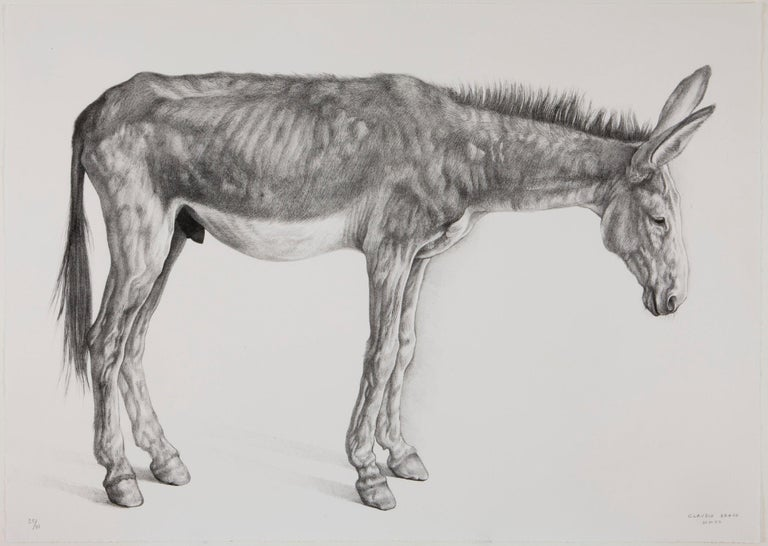 Claudio Bravo Animal Print - Burro Delgado (Thin Donkey)