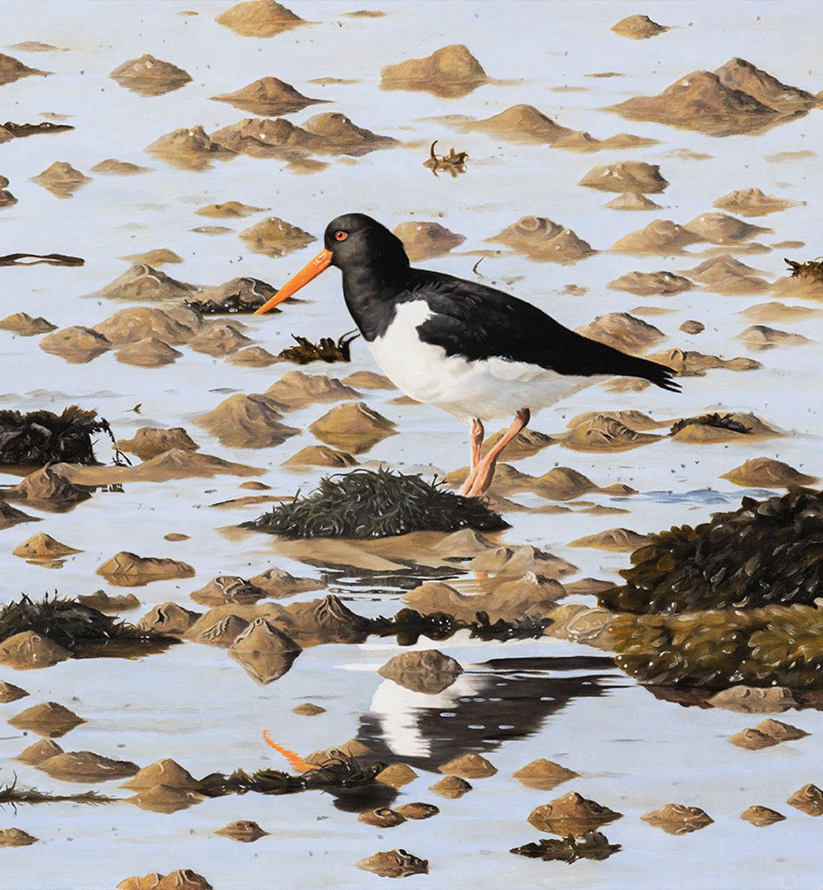 Oystercatcher, Low Tide - bird wildlife contemporary oil painting