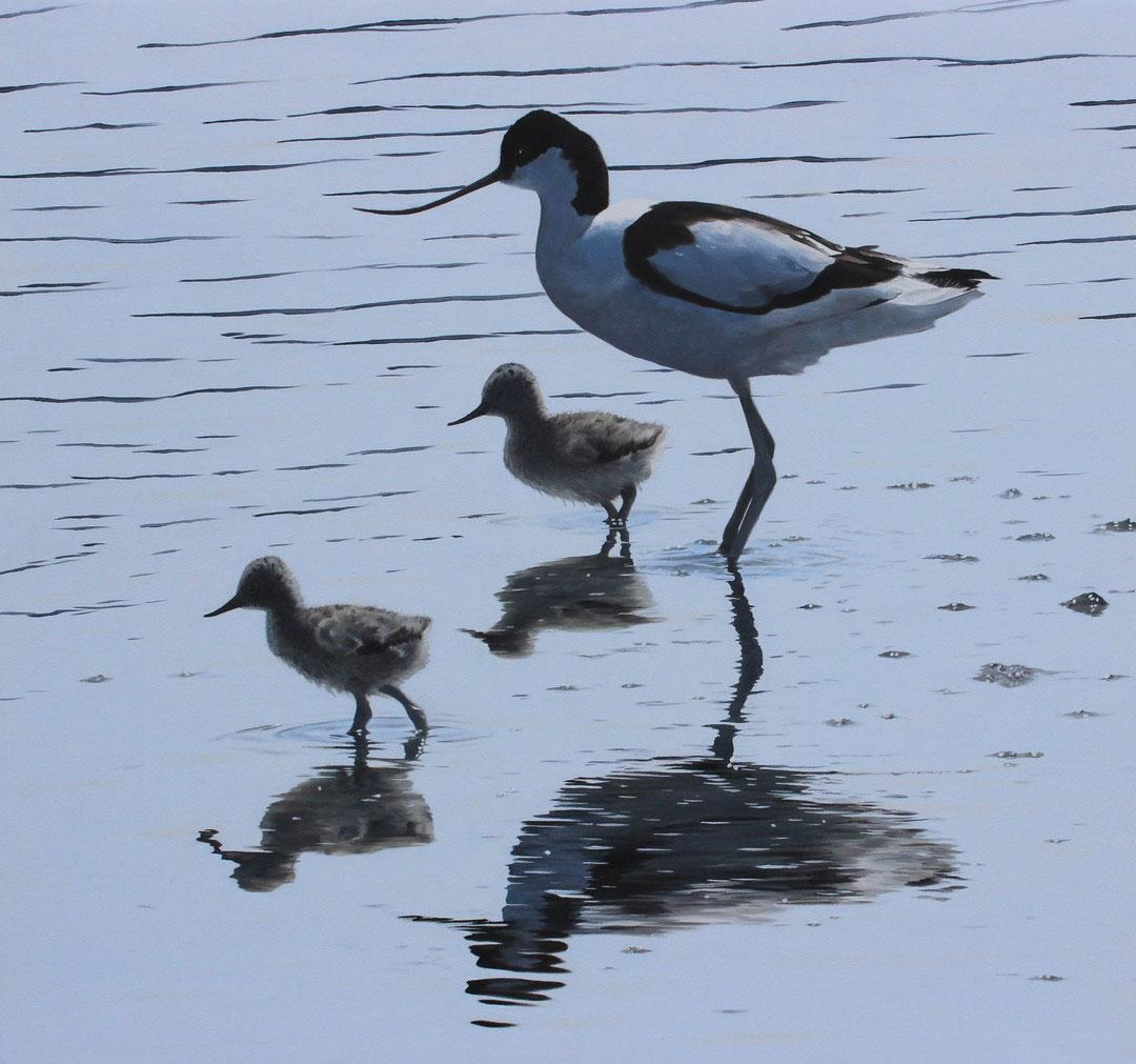 Quiet Reflections – Avocet and Chicks