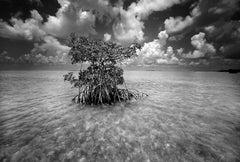 Shell Key by Clyde Butcher. Silver gelatin seascape photograph.