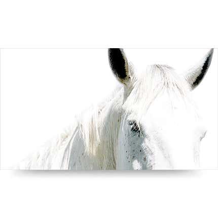 Bob Tabor, <i>Horse Portrait 27</i>, 2008