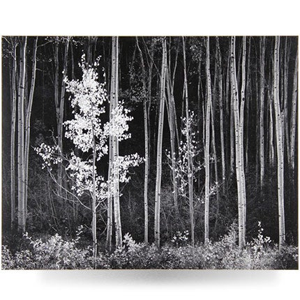 Ansel Adams, Aspens, Northern New Mexico, 1973–77