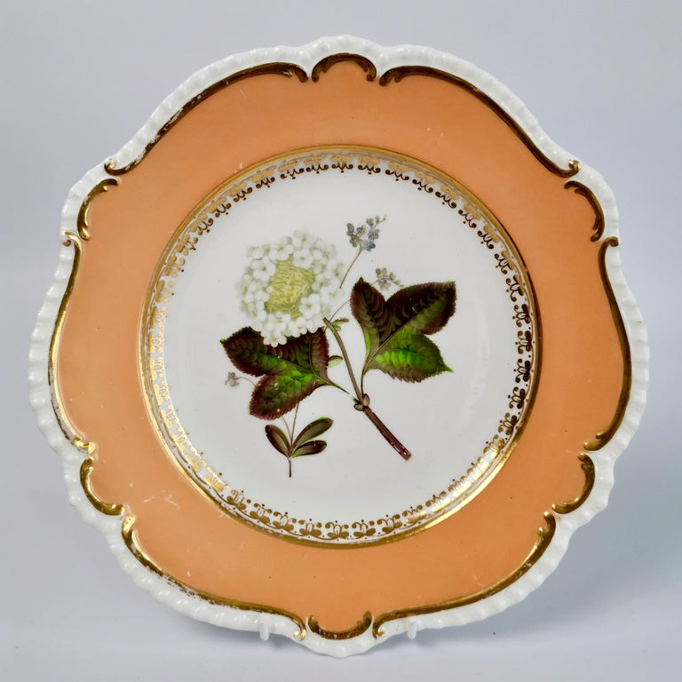 Coalport Porcelain Dessert Service, Botanical, Peach Ground, Regency 1820-1825 For Sale 8