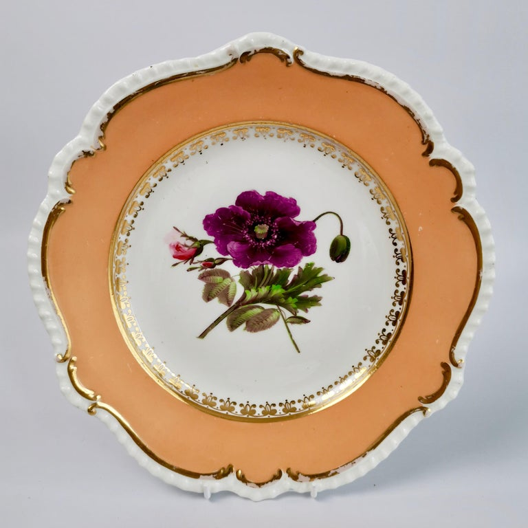 Coalport Porcelain Dessert Service, Botanical, Peach Ground, Regency 1820-1825 For Sale 9