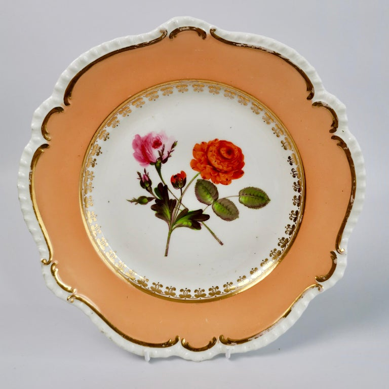 Coalport Porcelain Dessert Service, Botanical, Peach Ground, Regency 1820-1825 For Sale 10