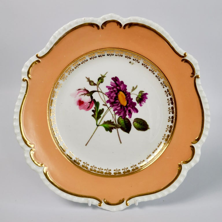 Coalport Porcelain Dessert Service, Botanical, Peach Ground, Regency 1820-1825 For Sale 11