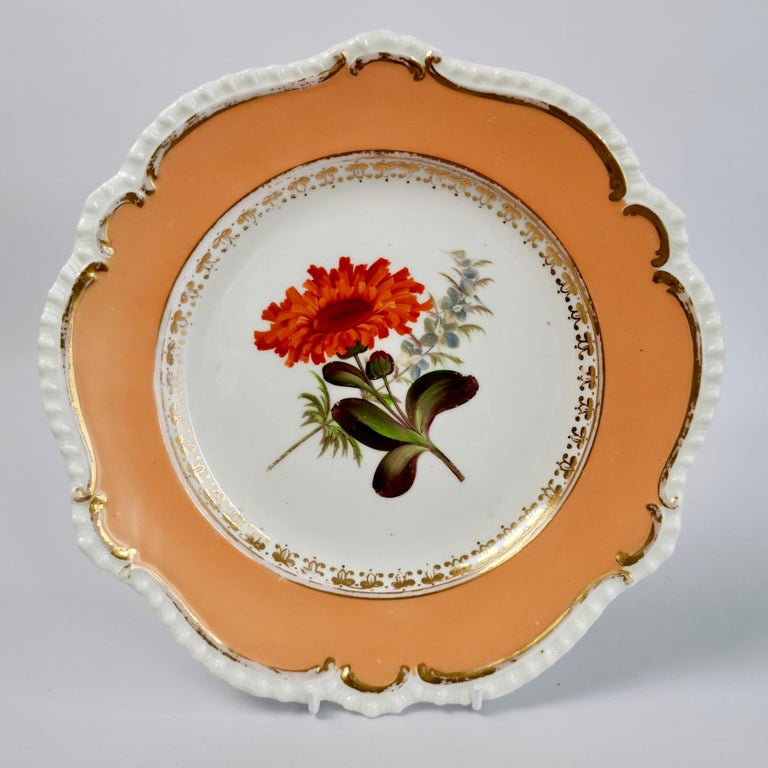Coalport Porcelain Dessert Service, Botanical, Peach Ground, Regency 1820-1825 For Sale 12