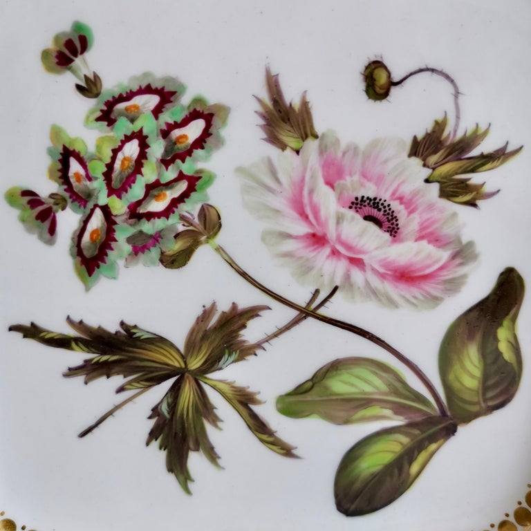 Regency Coalport Porcelain Part-Dessert Service, Maroon Botanical Cecil Jones, 1820-1825