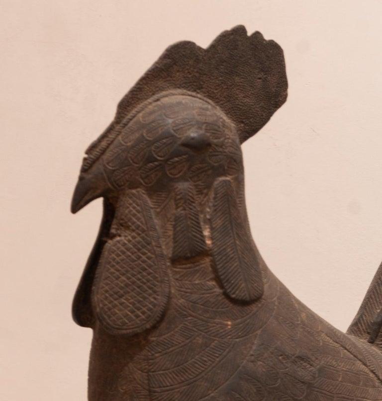 Beninese Cockrel For Sale