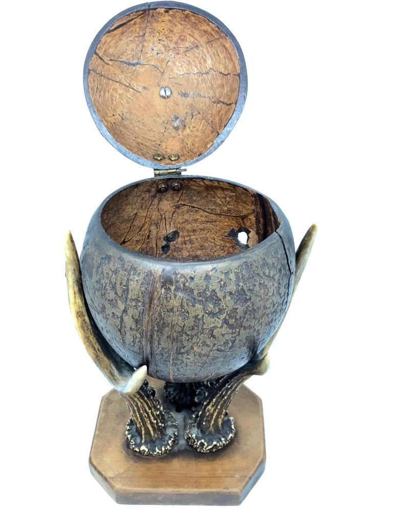 Austrian Coconut and Deer Antler Trophy Catchall 1890s, Vienna, Austria For Sale