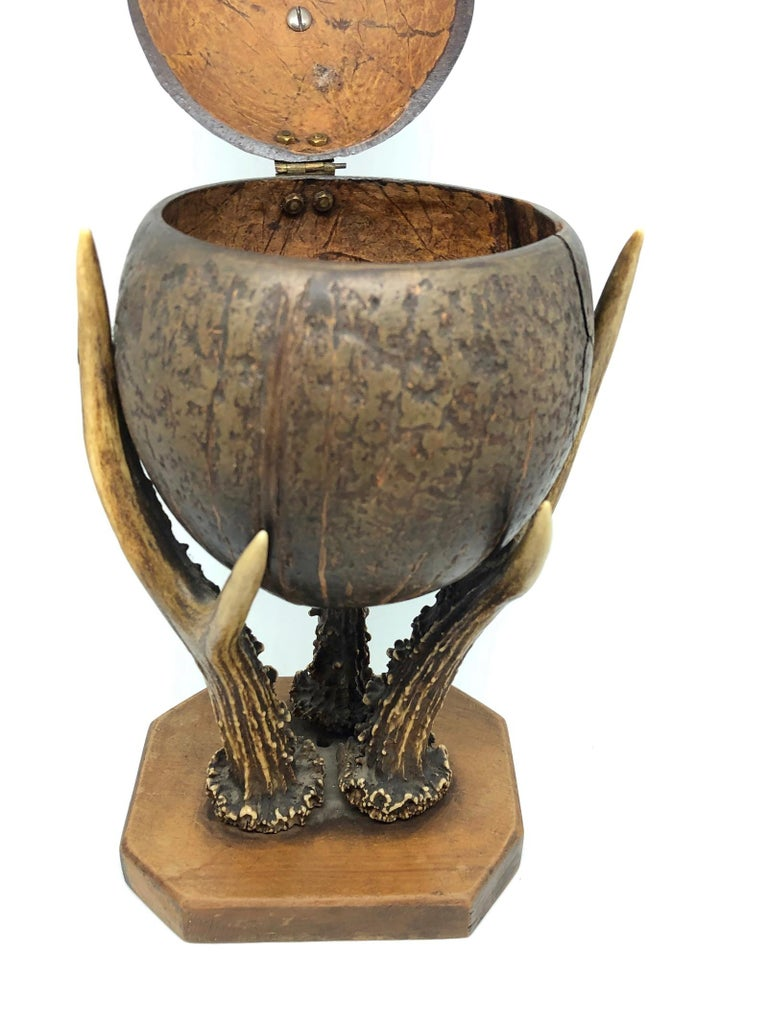 Coconut and Deer Antler Trophy Catchall 1890s, Vienna, Austria In Distressed Condition For Sale In Nürnberg, DE