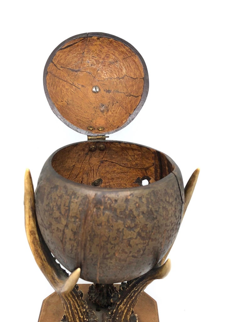 Late 19th Century Coconut and Deer Antler Trophy Catchall 1890s, Vienna, Austria For Sale