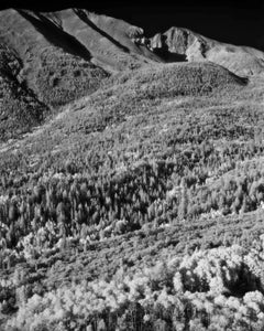 "4"" x 5"" Photography; 'Wheeler Peak'"