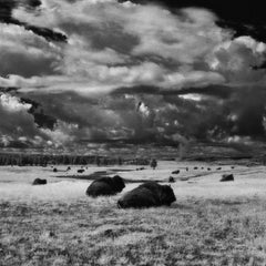Landscape Photography Square Series: 'Buffalo'