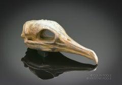 """""""Cormorant Talisman Skull"""" Bronze Sculpture"""