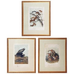 "Collection of 11 Matted and Framed ""Quadrupeds"" after Audubon"