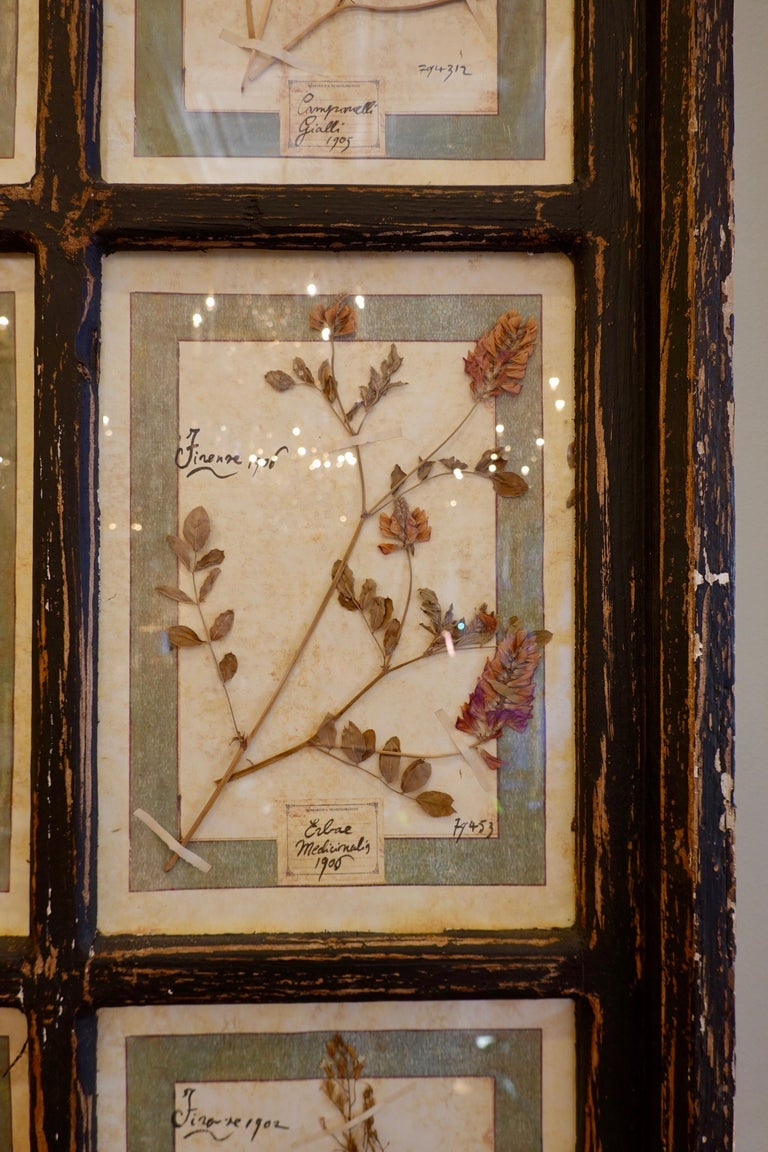 Collection of 16 Italian Herbiers Set in Large Paned Window Frame For Sale 3