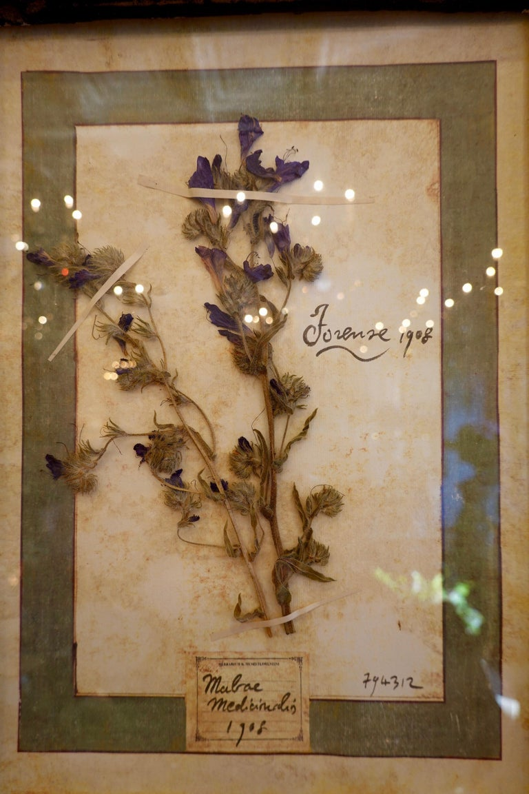 Collection of 16 Italian Herbiers Set in Large Paned Window Frame For Sale 5