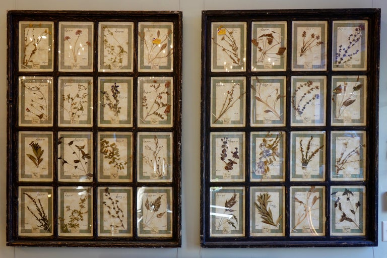Collection of 16 Italian Herbiers Set in Large Paned Window Frame For Sale 6