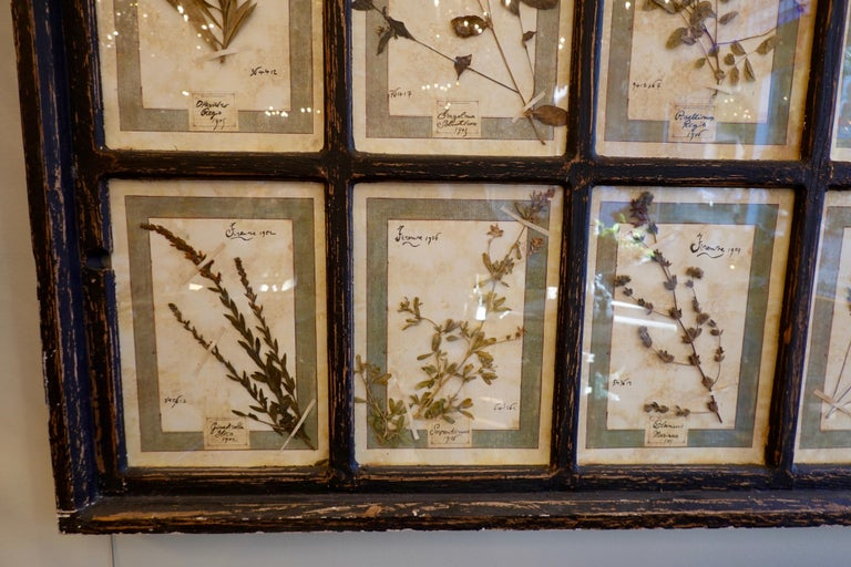 Collection of 16 Italian Herbiers Set in Large Paned Window Frame For Sale 7