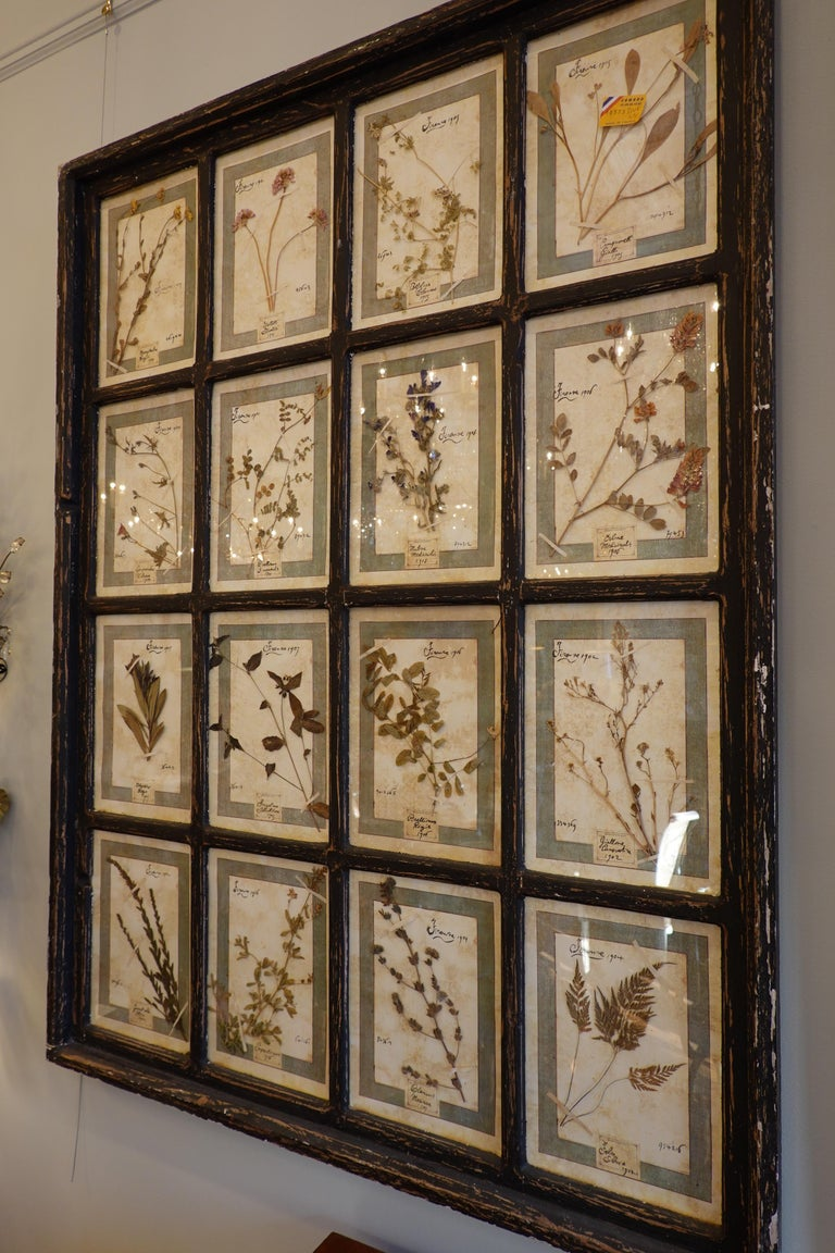 Arts and Crafts Collection of 16 Italian Herbiers Set in Large Paned Window Frame For Sale