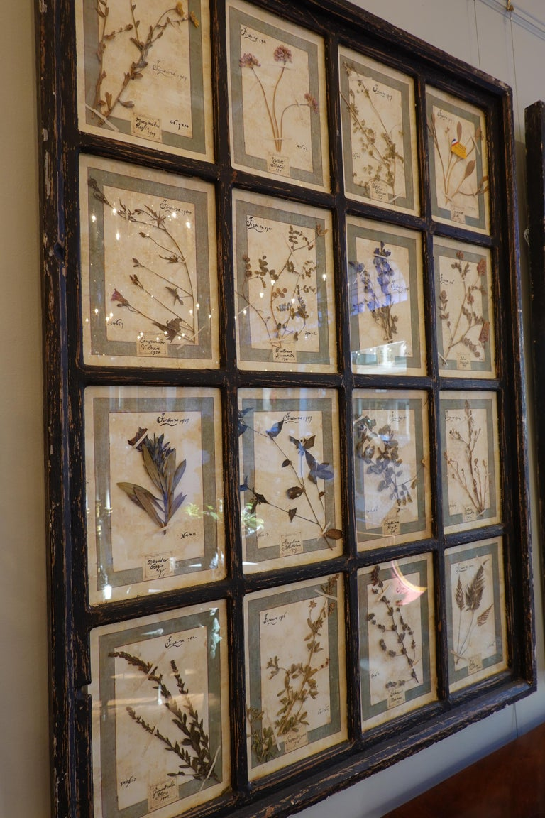 Polychromed Collection of 16 Italian Herbiers Set in Large Paned Window Frame For Sale