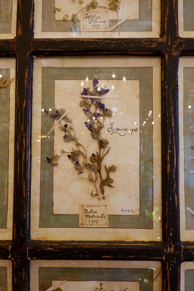 Collection of 16 Italian Herbiers Set in Large Paned Window Frame For Sale 2