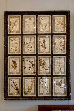 Collection of 16 Italian Herbiers Set in Large Paned Window Frame (3 available)